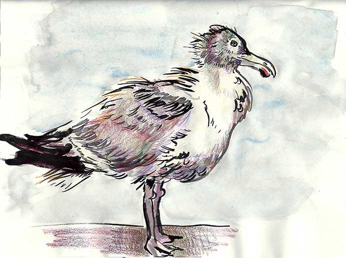 lone-seagull-1