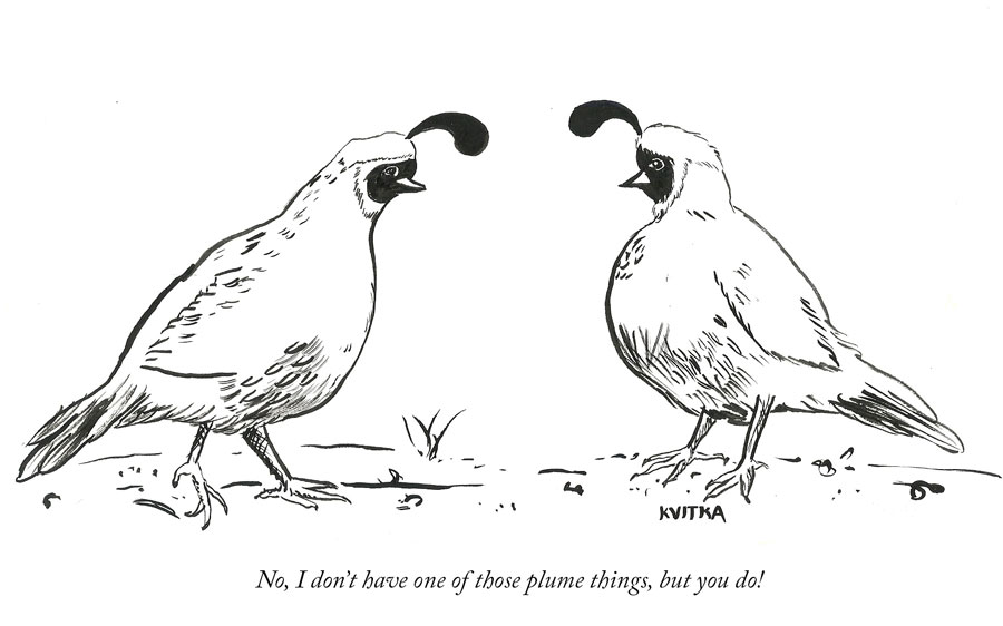 comic with two quail