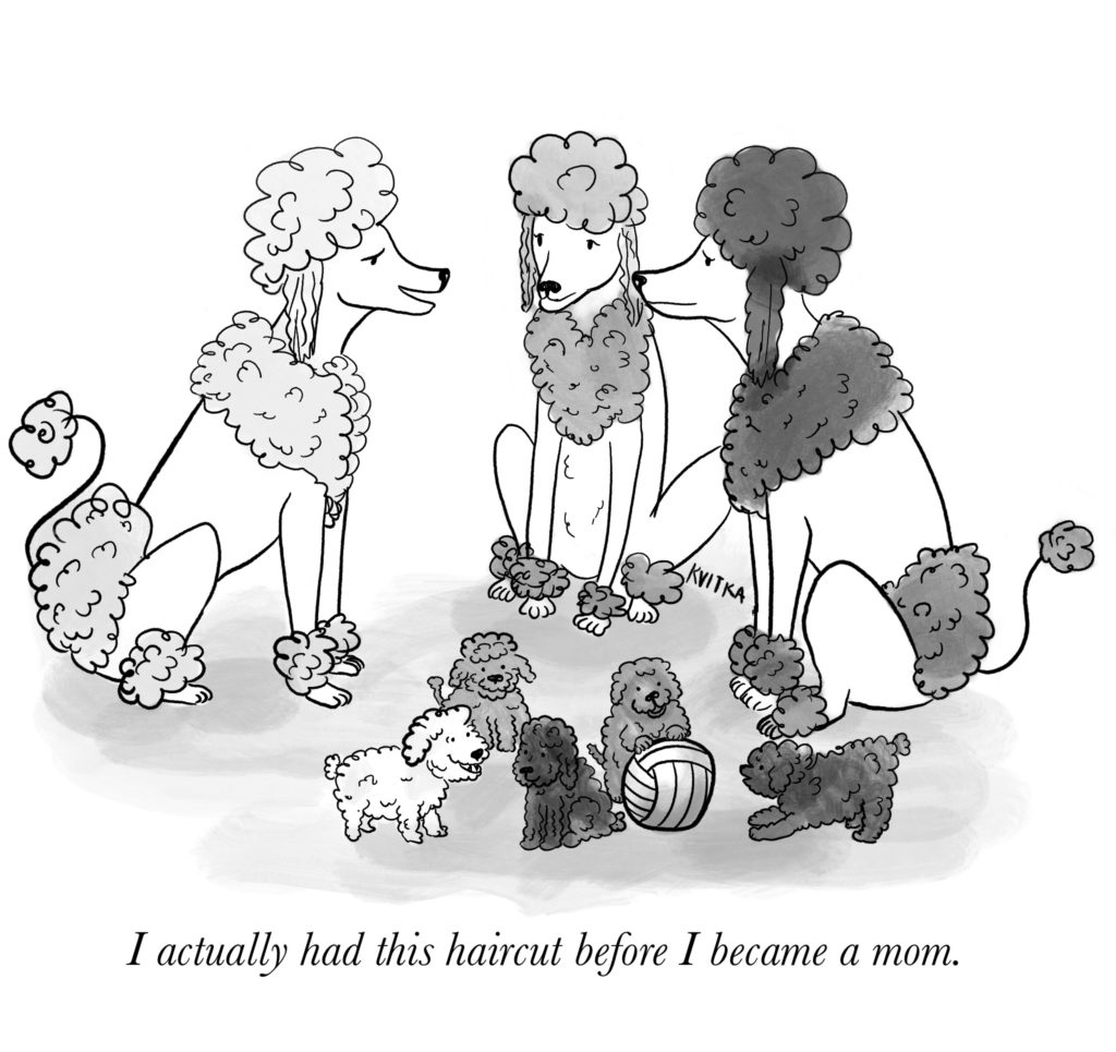 """Three adult poodles with classic """"lion"""" cuts talk while their puppies play nearby."""